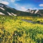 trawa w górach tęczowych landmannalaugar