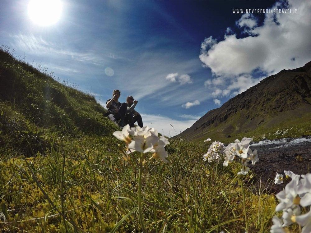 biwakowa toaleta na islandii, camping biwak, rzeka, kwiaty, przyroda