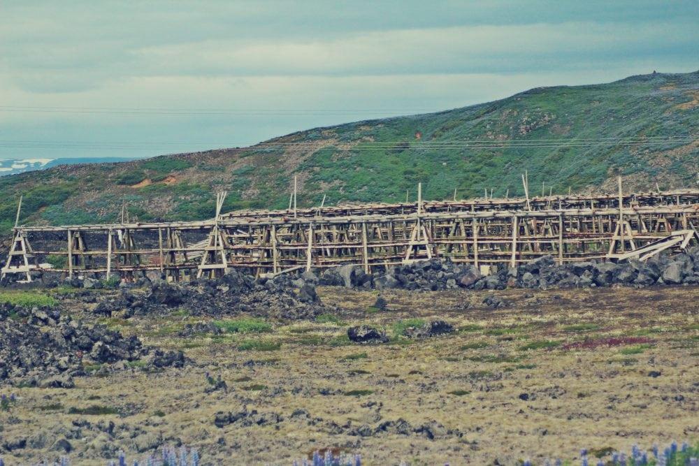 suszone ryby islandia