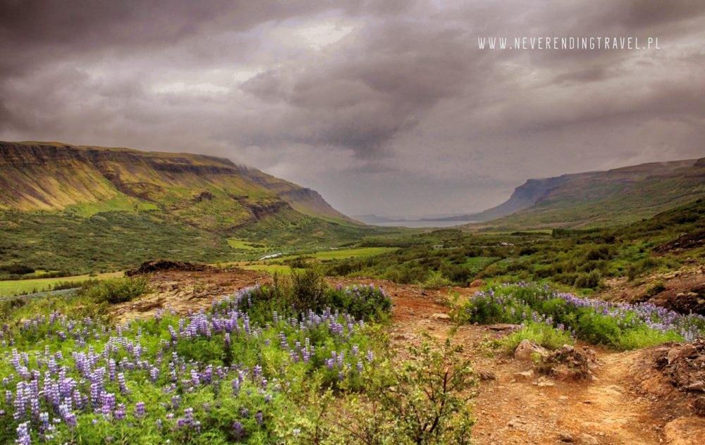 islandia, łubin, góry na trasie do Glymur