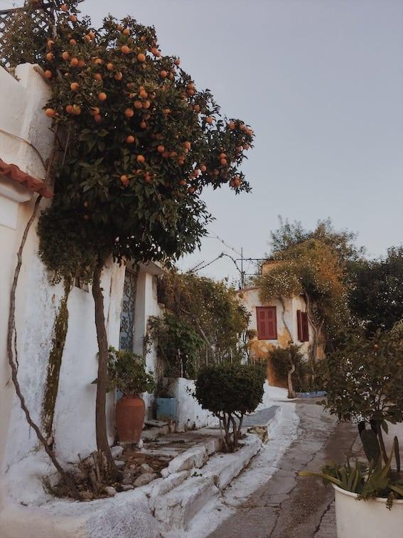 lista nieznanych miejsc w Atenach drzewo-pomarańczy-Anafiotika-neverendingtravel