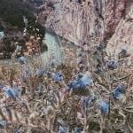 kwiaty-El Caminito del Rey_neverendingtravel.pl