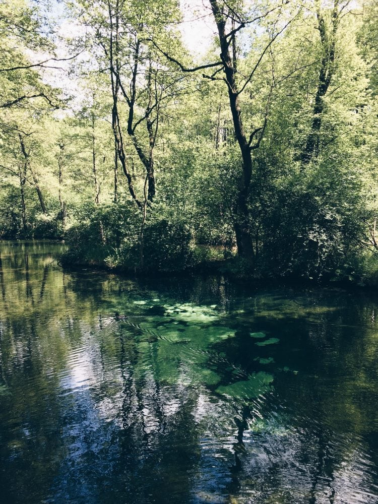 niebieskie źródła w okolicach Spały, na zdjęciu drzewa nad wodą w której widać jasne plamy na dnie zbiornika