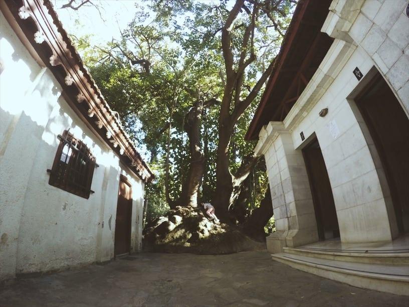 lista nieznanych miejsc w Atenachubikacja-wc-w-National-Garden-Ateny-neverendingtravel.pl