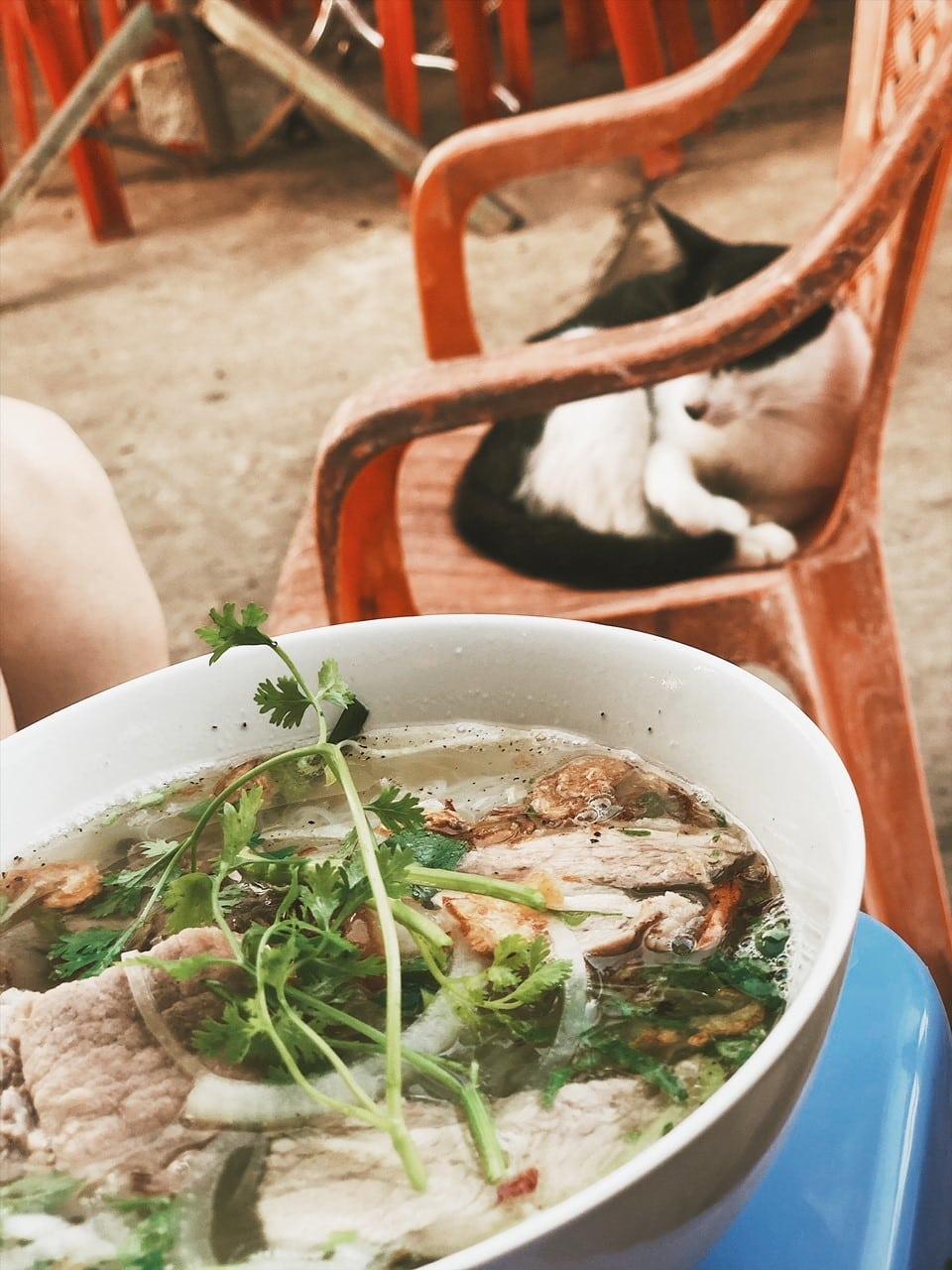 zupa wietnam, port rach gia, kot na krześle, neverenedingtravel, czekamy na prom i jemy śniadanie