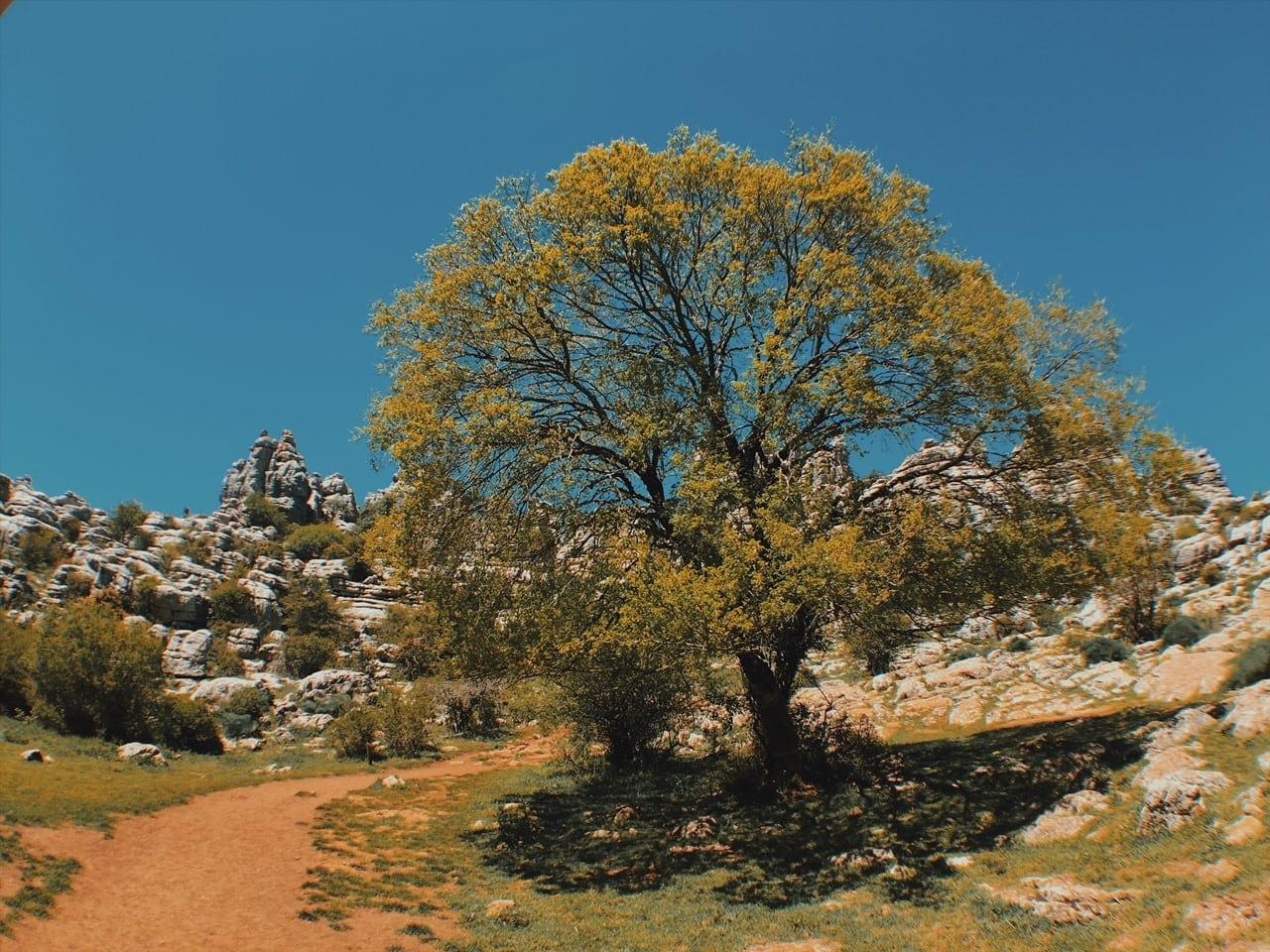 El Torcal de Antequera majówka andaluzja neverendingtravel.pl trekking, skały, górski spacer, trasa, szlak w górach, ścieżka, rezerwat, park narodowy, drzewo