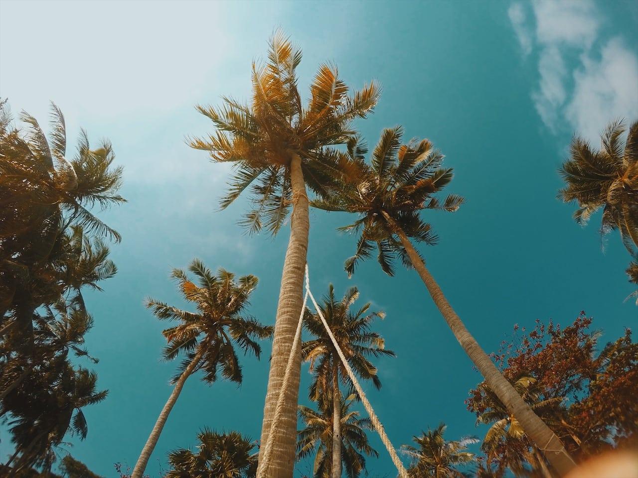 palmy sao beach wyspa phu quoc wietnam neverendingtravel.pl