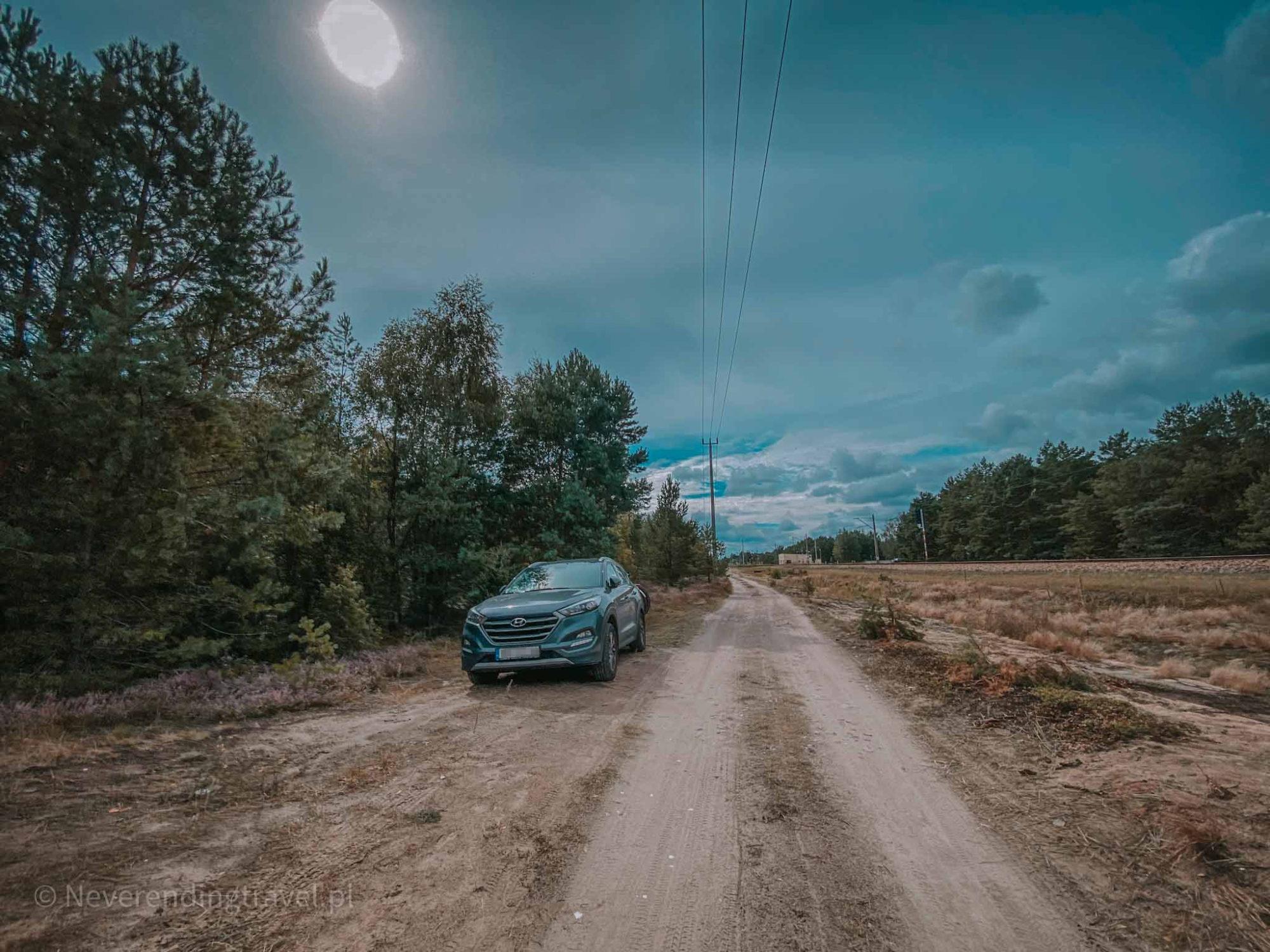wrzosowisko pod Warszawą, największe w Polsce, plener, sesja, na weekend z Warszawy, wrzosy, drzewa, wycieczka, droga dojazdowa do Wrzosowiska Mostówka