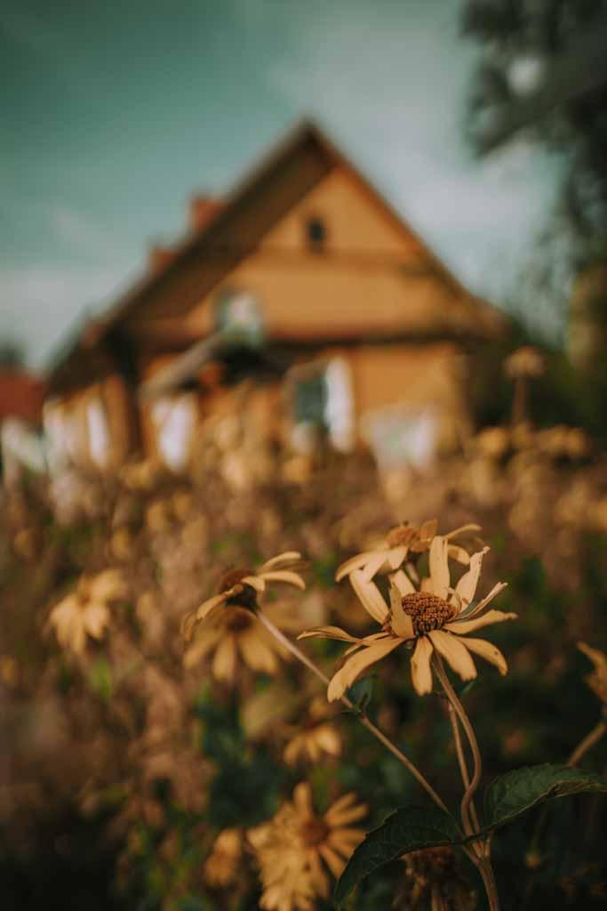 Borek dzielnica drewnianych domów w Zwierzyńcu, roztocze , atrakcje, co warto zobaczyć, gdzie na weekend, lubelskie