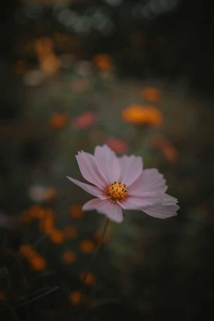 kwiaty, bokeh, blisko warszawy na weekend, ciekawe miejsce, mazowieckie