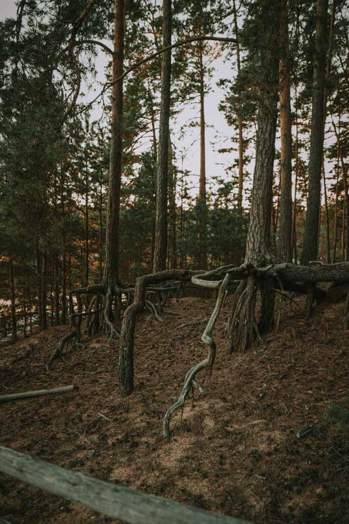 Stawy Echo na roztoczu, jezioro, plaża, drewniane pomosty, kładki, roztoczański park narodowy, przyroda, pomysł na weekend