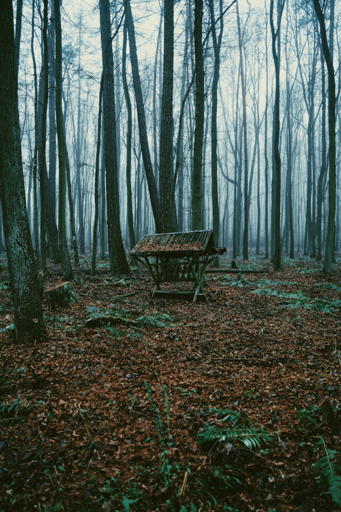rezerwat modrzewina, mazowieckie na weekend, ciekawe miejsce, mało znane mazowsze, spacer w lesie, weekend za warszawą, moda na mazowsze