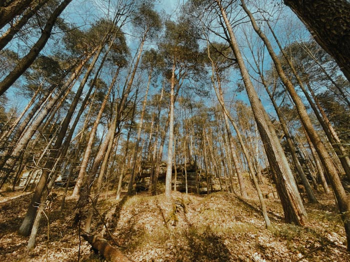 rezerwat Skały pod Adamowem, świętokrzyskie, ciekawe miejsce w Polsce, gdzie na weekend, góry świętkokrzyskie, wypad z warszawy, na jeden dzień wycieczka